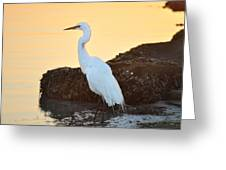 Egret On Dunedin Causeway Greeting Card