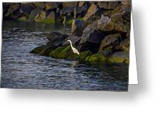 Egret On The Rocks Greeting Card