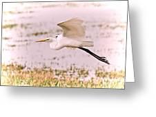 Egret Pastel Greeting Card