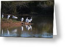 Egret Point Greeting Card