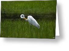 Egret Preen Greeting Card