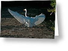 Egret Showing Off Greeting Card