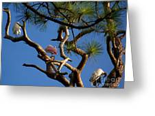 Egret Spoonbill And Stork Greeting Card