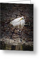 Egret Strut Greeting Card