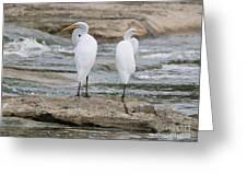 Egrets 4649 Greeting Card