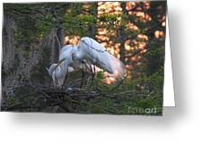 Egrets At Nest Greeting Card