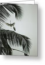 Egrets In A Palm Tree, Bali, Indonesia Greeting Card