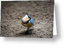 Egyptian Plover Greeting Card