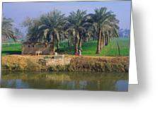 Egyptian Village Greeting Card