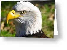 Bald Eagle Head Shot One Greeting Card
