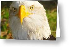 Bald Eagle Head Shot Two Greeting Card