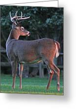 Eight Point Greeting Card
