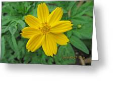 Eight Yellow Petals Greeting Card