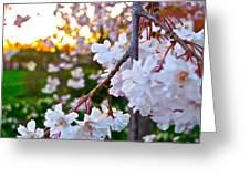 Einstein's Blossoms Greeting Card