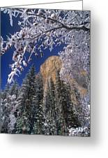 El Capitan Framed By Snow Covered Black Oaks California Greeting Card