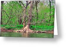 Elder Tree Greeting Card