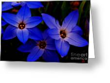Electric Blue Greeting Card by Sharon Costa