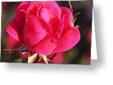 Electron Tea Rose Greeting Card