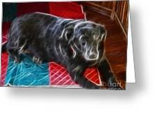 Electrostatic Dog And Blanket Greeting Card