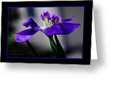 Elegant Iris With Black Border Greeting Card