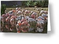 Elegant Pink Greeting Card