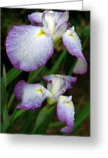 Elegant Purple Iris Greeting Card
