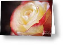 Elegant Rose Greeting Card