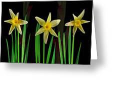 Elegant Yellow Flowers On Green Shoots Greeting Card