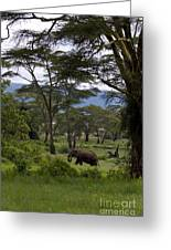 Elephant   #0068 Greeting Card