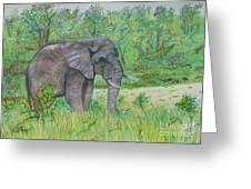 Elephant At Kruger Greeting Card