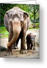 Elephant Baby Olli With Mommy Greeting Card
