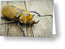 Elephant Beetle Greeting Card by Aged Pixel