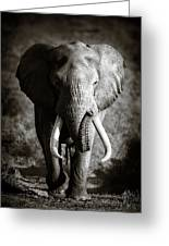 Elephant Bull Greeting Card