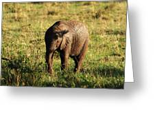 Elephant Calf Greeting Card