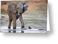 Elephant Calf Spraying Water Greeting Card