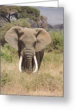 Elephant Charge Greeting Card