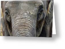 Elephant Close Up 1 Greeting Card