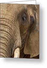 Elephant Close Up Greeting Card