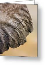 Elephant Ear Close-up Greeting Card by Johan Swanepoel
