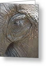 Elephant Eye Chiang Mai, Thailand Greeting Card