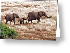 Elephant Family, Tanzania Greeting Card