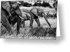 Elephant Family Greeting Card