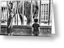 Elephant I Greeting Card