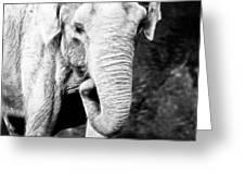 Elephant IIi Greeting Card