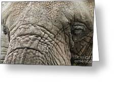 Elephant In Fresco Stle Greeting Card