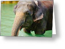 Elephant In Water Greeting Card