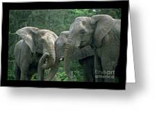 Elephant Ladies Greeting Card