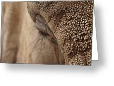 Elephant Lashes Greeting Card