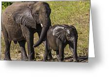 Elephant Mom And Baby Greeting Card