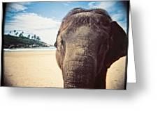 Elephant On The Beach Greeting Card by Carol Whaley Addassi